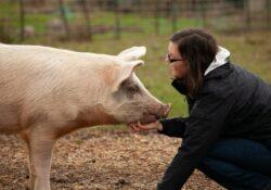pig-love
