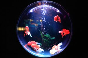 fish bowl - Franz Kafka - vegetarian